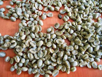 coffee in Nicaragua