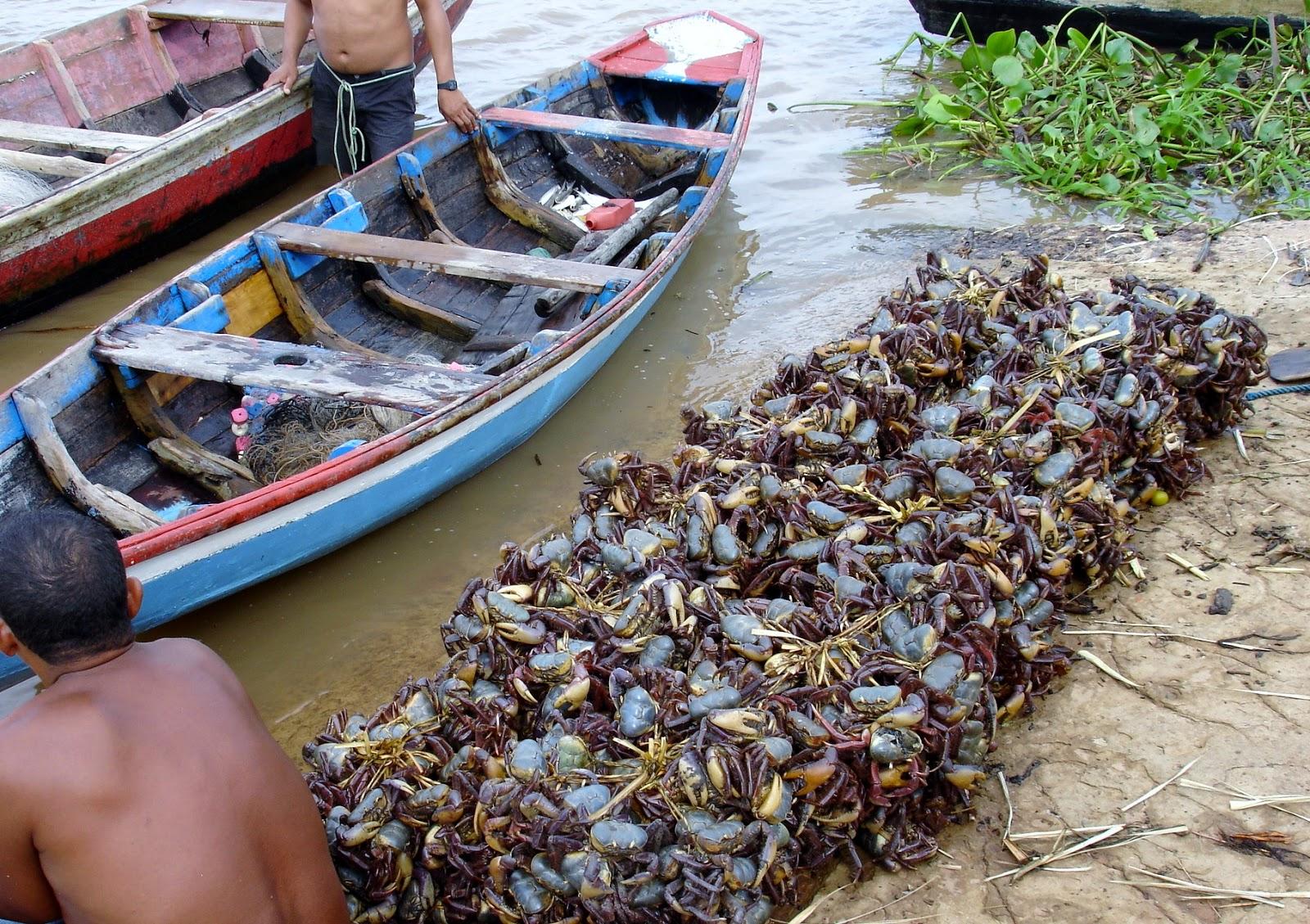 Resultado de imagem para delta do rio parnaíba caranguejos