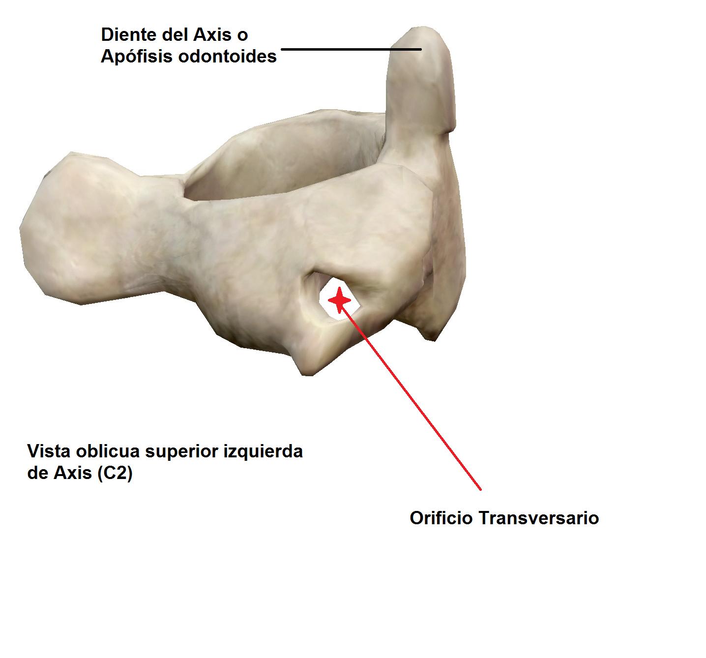 Si puede a la osteocondrosis de pecho