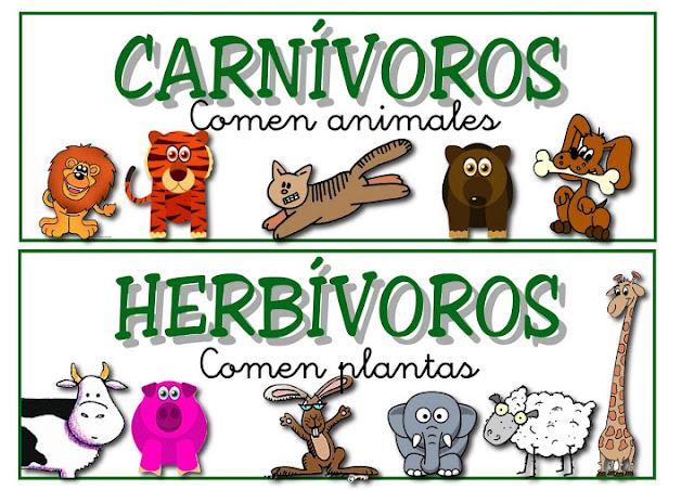 Coplas De Animales Para Primer Grado   newhairstylesformen2014.com