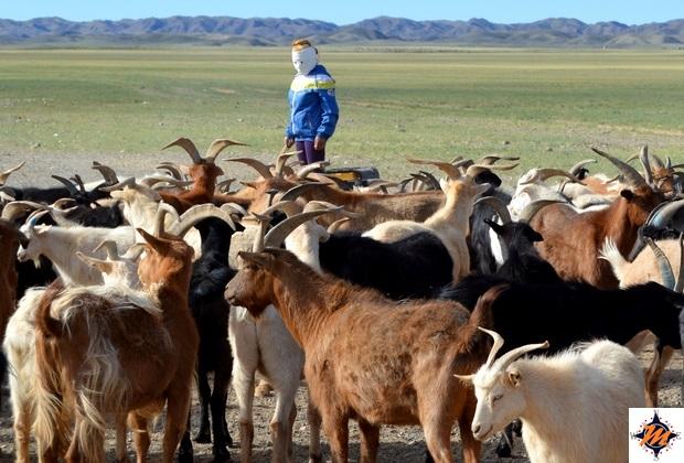 Lungo la steppa mongola