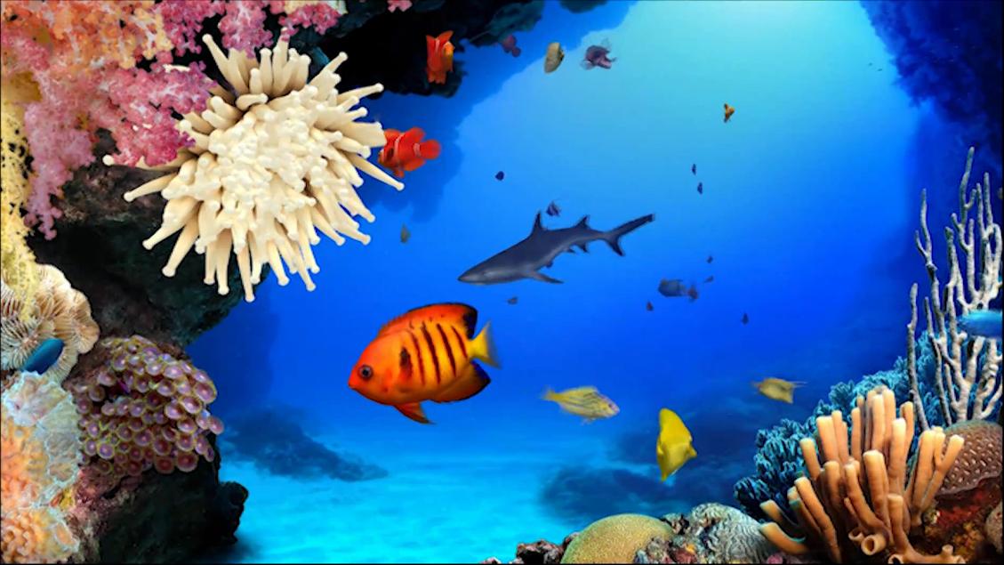Protectores de pantalla peces en movimiento gratis imagui for Protector de pantalla en movimiento