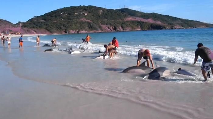 Golfinhos encalham em Arraial do Cabo-RJ