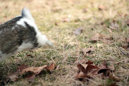 rabbit running away
