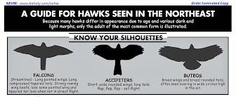 Guia de Siluetas para identificar Aves Rapaces de Norte América