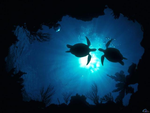 Very beautiful turtle