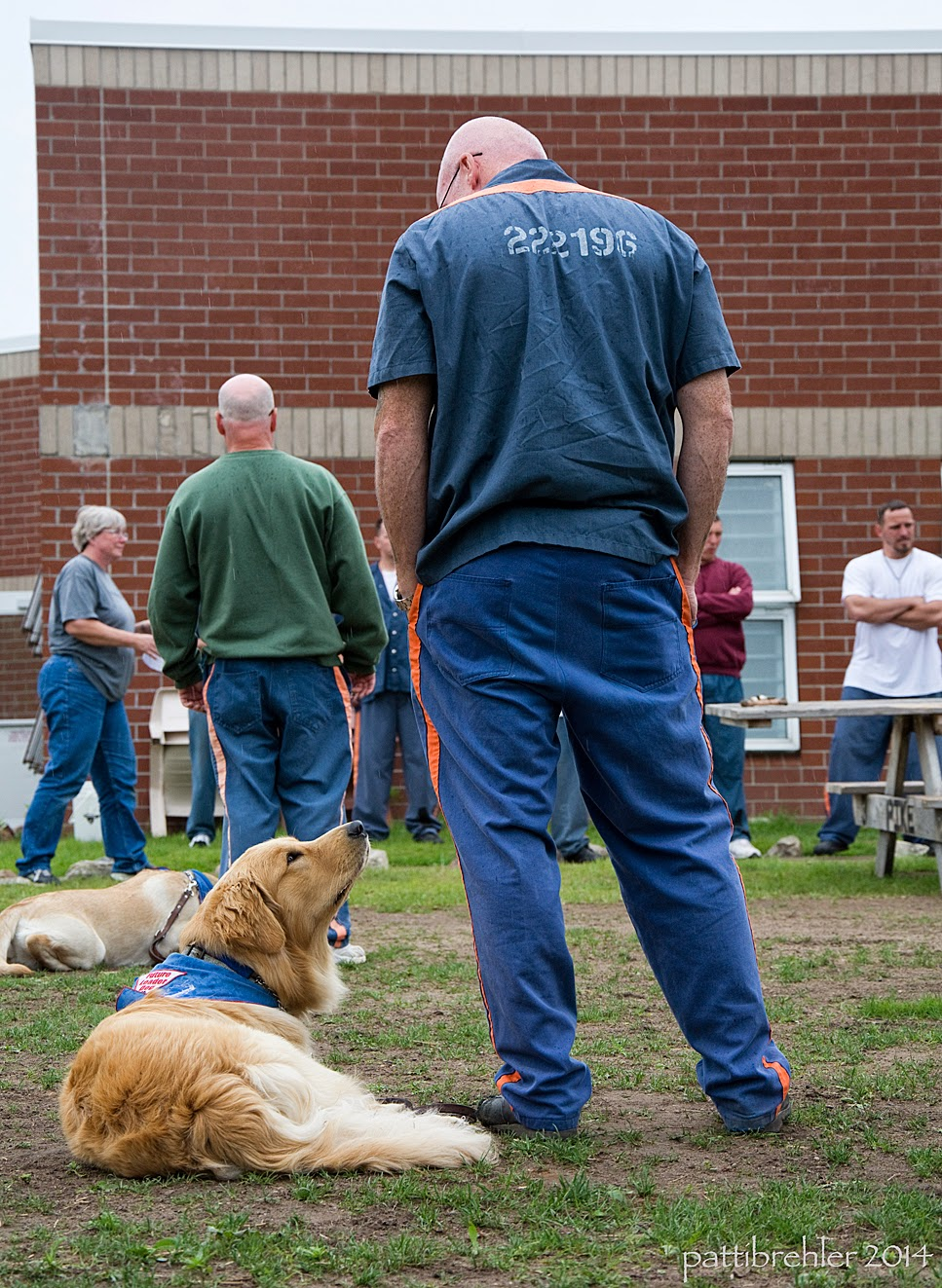 The two goldens are still lying down, the one in the foreground is looking up at the man standing next to him. The man is looking down at the puppy.