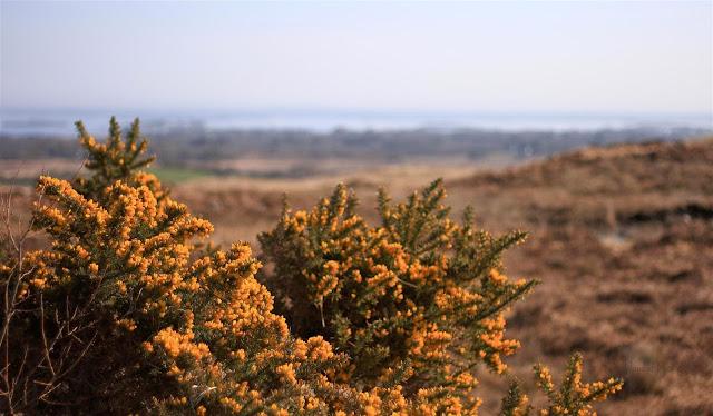 view over Lough Corrib, Ireland