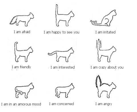 Understanding Cat Body Language Cat on cat 5 vs 6