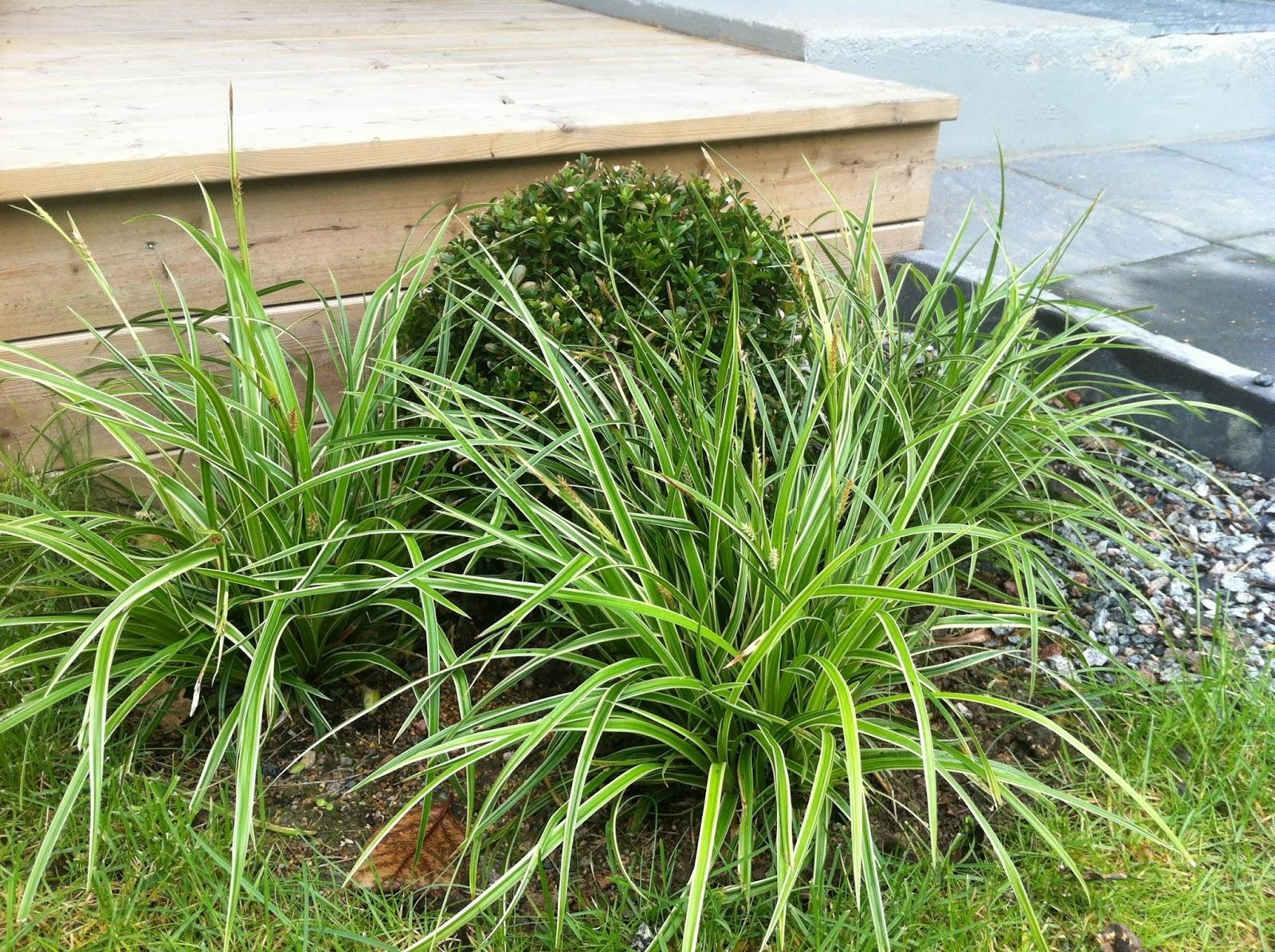 Njut i din trädgård: Gratis är gott!