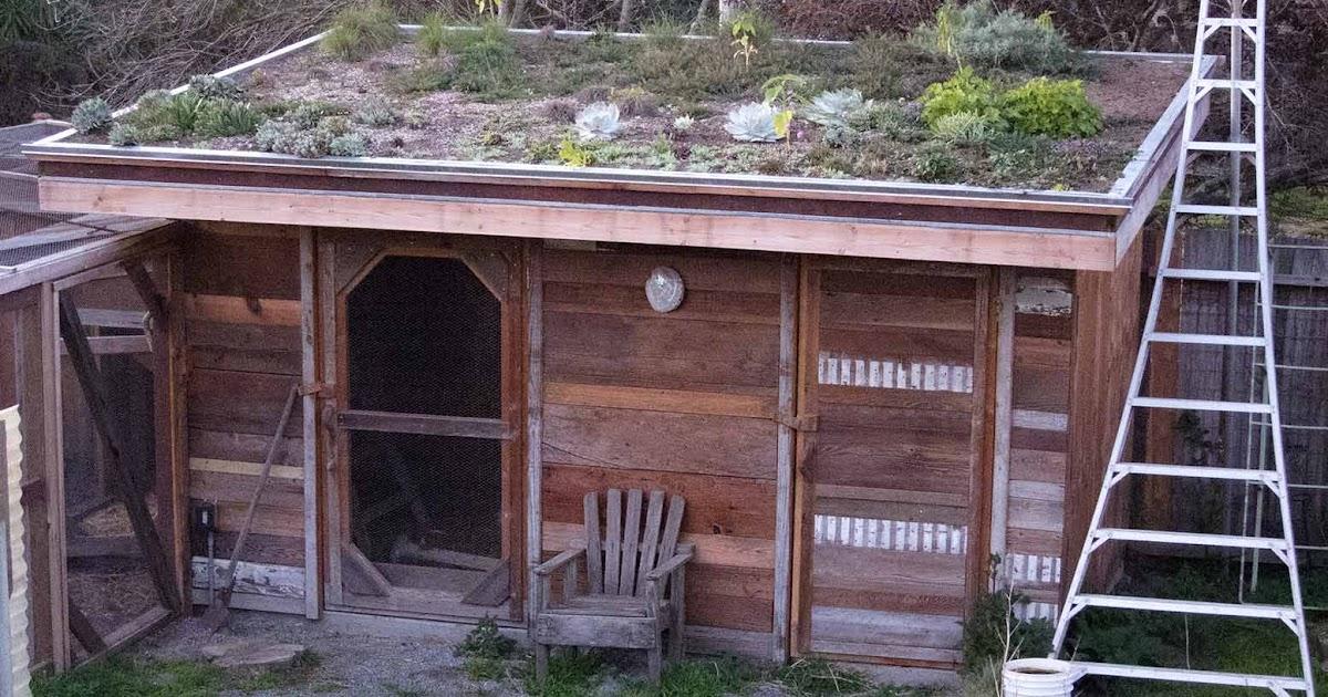 how to build chicken coop canada
