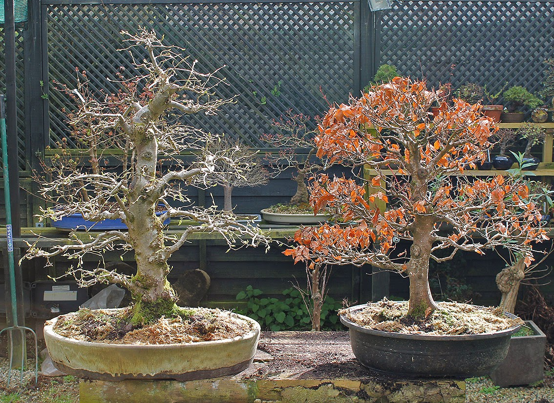 Little Cornish Trees Couple Of West Country Natives Turn Up