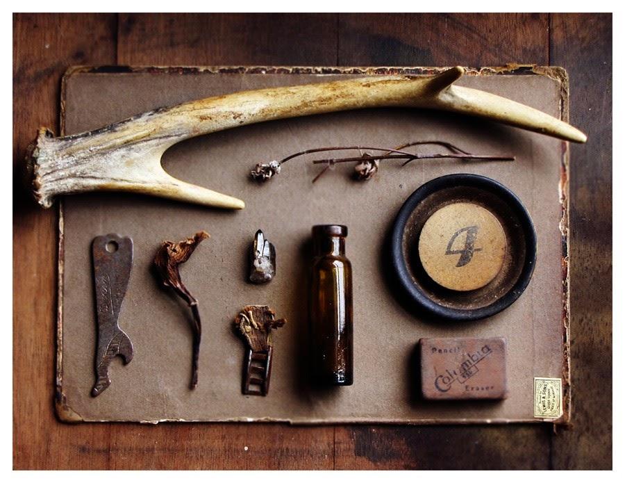natural specimen collection - wonder cabinet photography