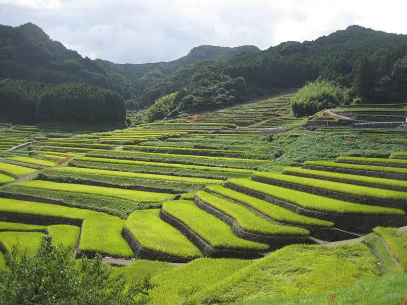Terasasta polja  Pirincana-polja-4