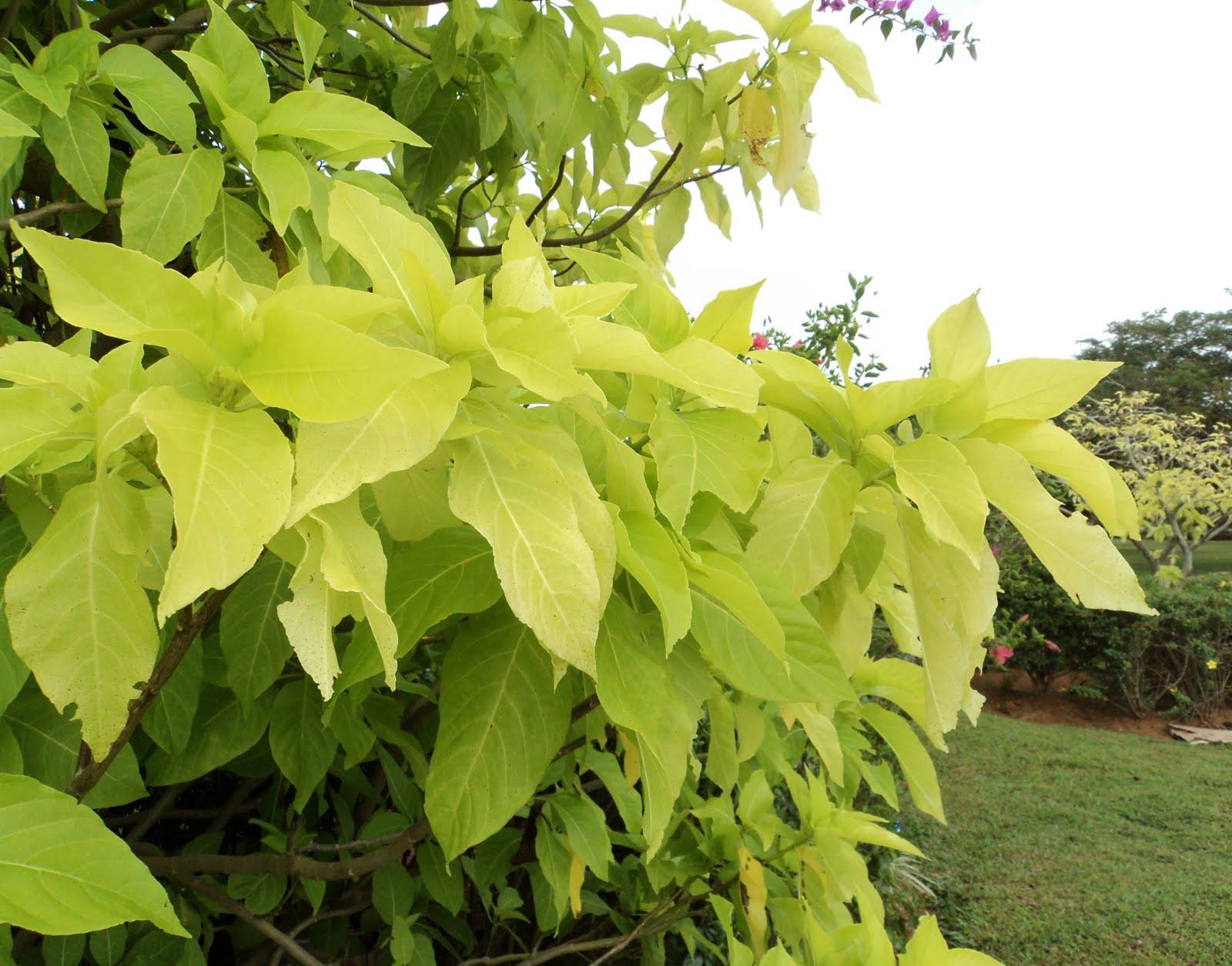 Vriksha Nursery 20 Plants That Survive At The Mumbai Sea Face