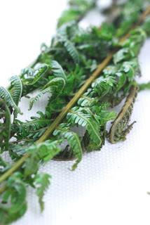 manfaat khasiat daun pakis