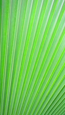 Palmenblatt Nahaufnahme auf den Seychellen