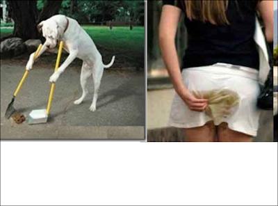 Cachorro tira o cocô da rua enquanto mulher caga nas cauças