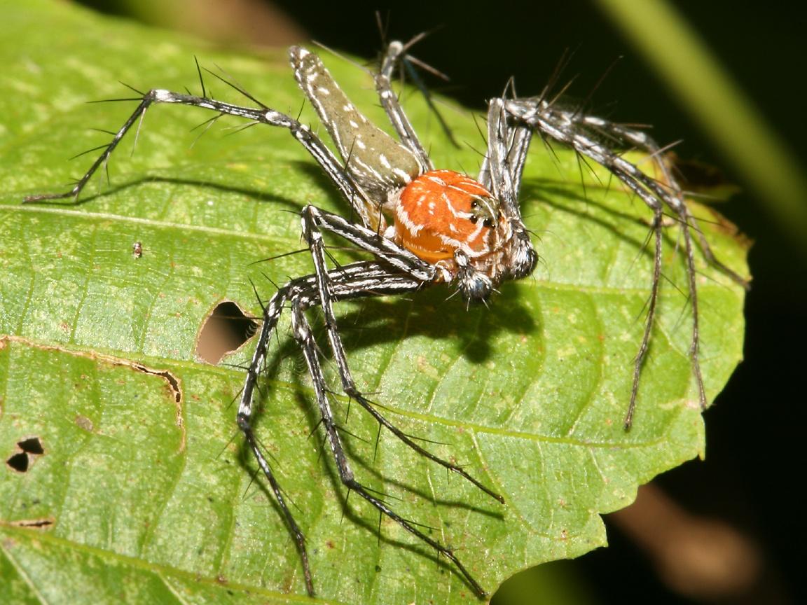 Spider | The Biggest Animals Kingdom