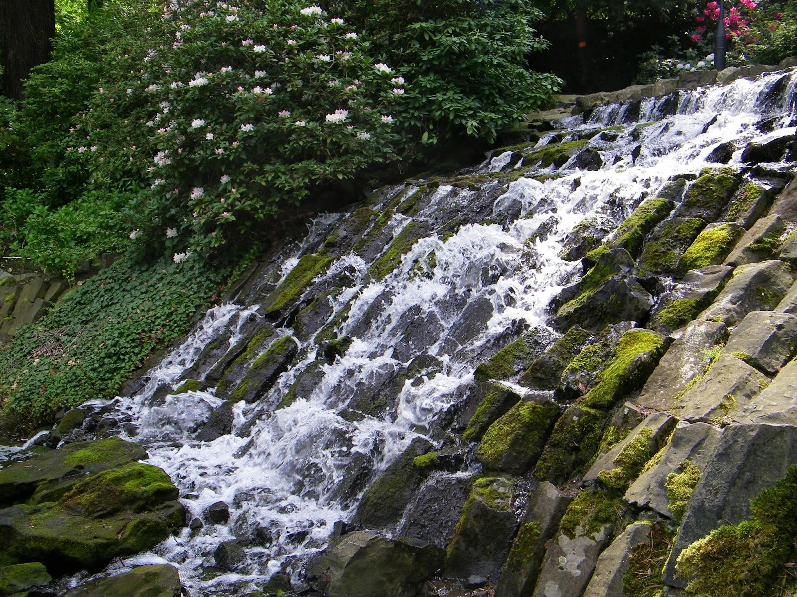 wodne kaskady w ogrodzie
