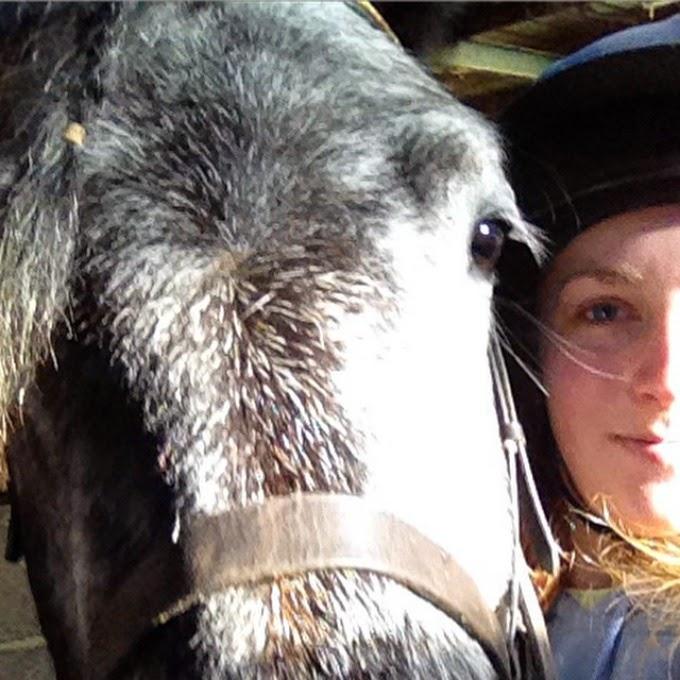 Close up with highland pony