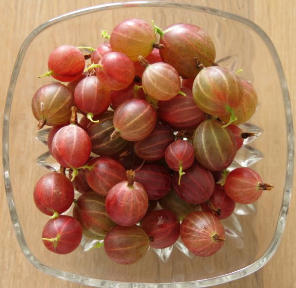 gooseberries, krusbär