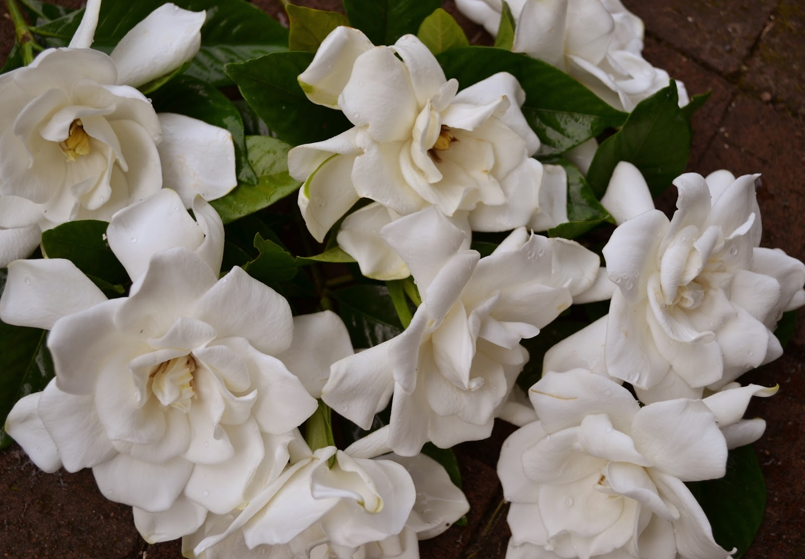 wedding flowers from springwell gardenias for white bouquets, Beautiful flower