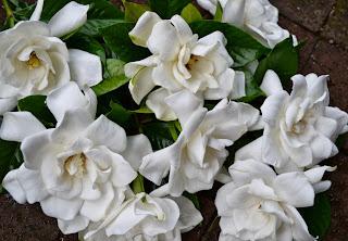 http://1.bp.blogspot.com/-Kc0zoYGrYR0/UcOBhEdbMRI/AAAAAAAAEuc/EgBw3anLPBQ/s1600/Copy+of+Garden+009.jpg