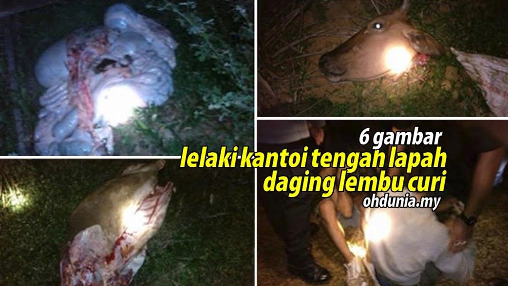 Dua Lelaki Ditangkap Ketika Sedang Melapah Lembu Curi (6 Gambar)