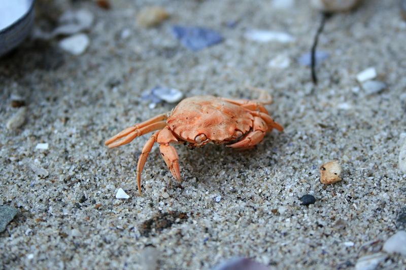 Lobster Zones Nova Scotia | Lobster House