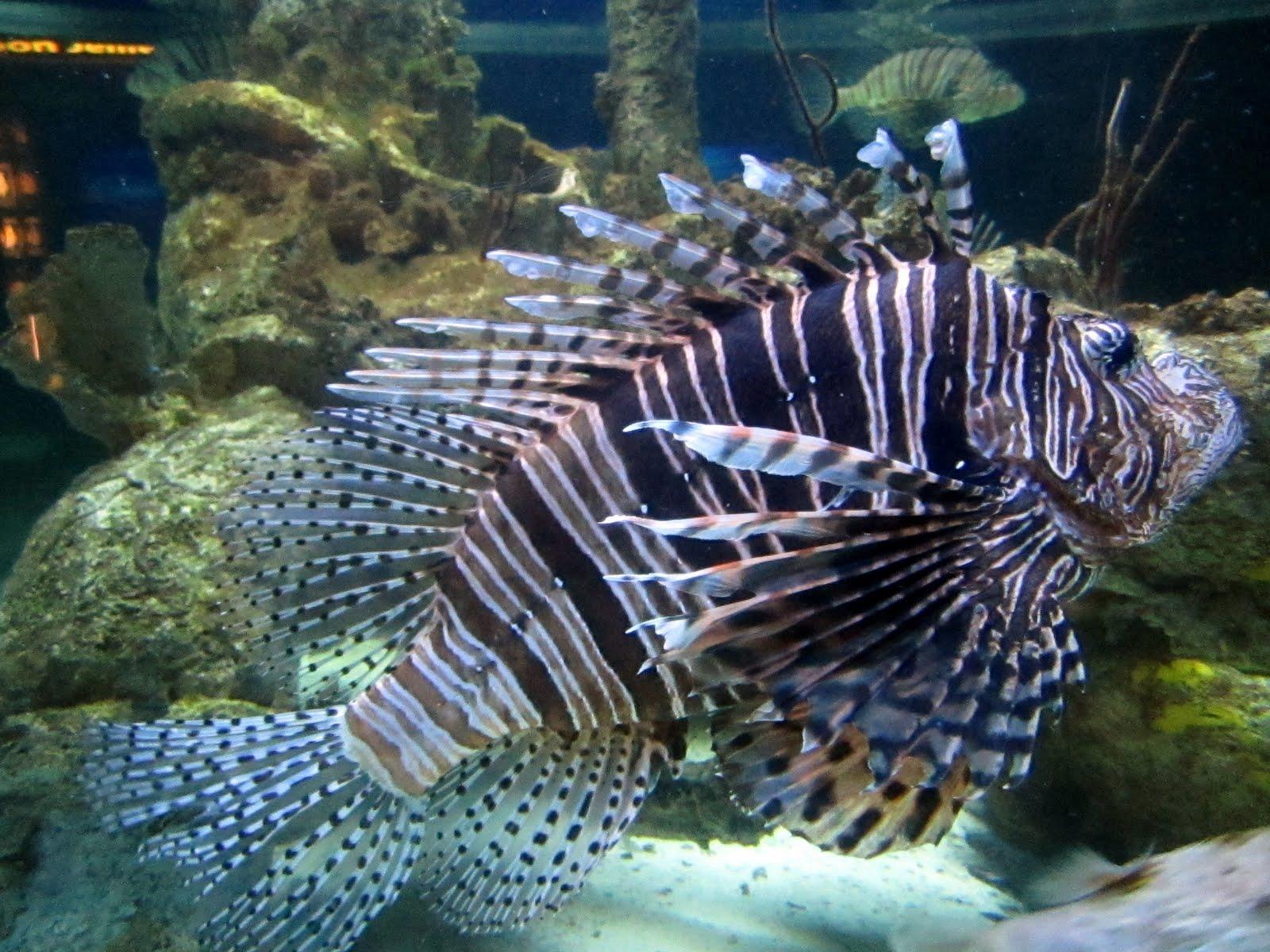 Hasty Pics North Carolina Aquarium At Pine Knoll Shores