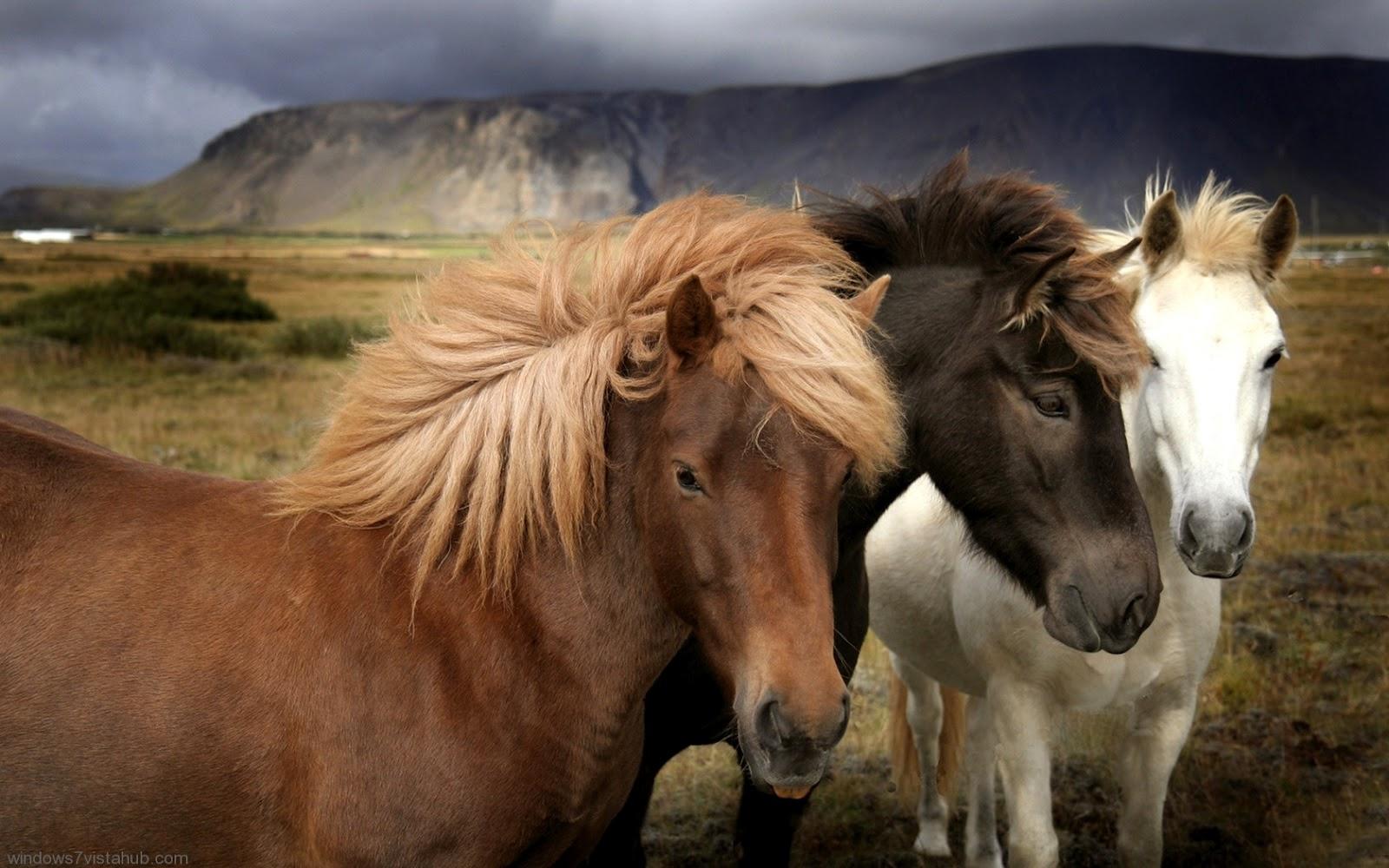 http://1.bp.blogspot.com/-Kd03CuK8bNo/UCCLel3si6I/AAAAAAAACW4/a089br1g_As/s1600/11023_Horses_7.jpeg