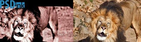 membuat efek film pada foto dengan photoshop