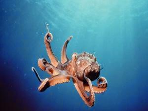 Pulpo de control remoto de Octopus