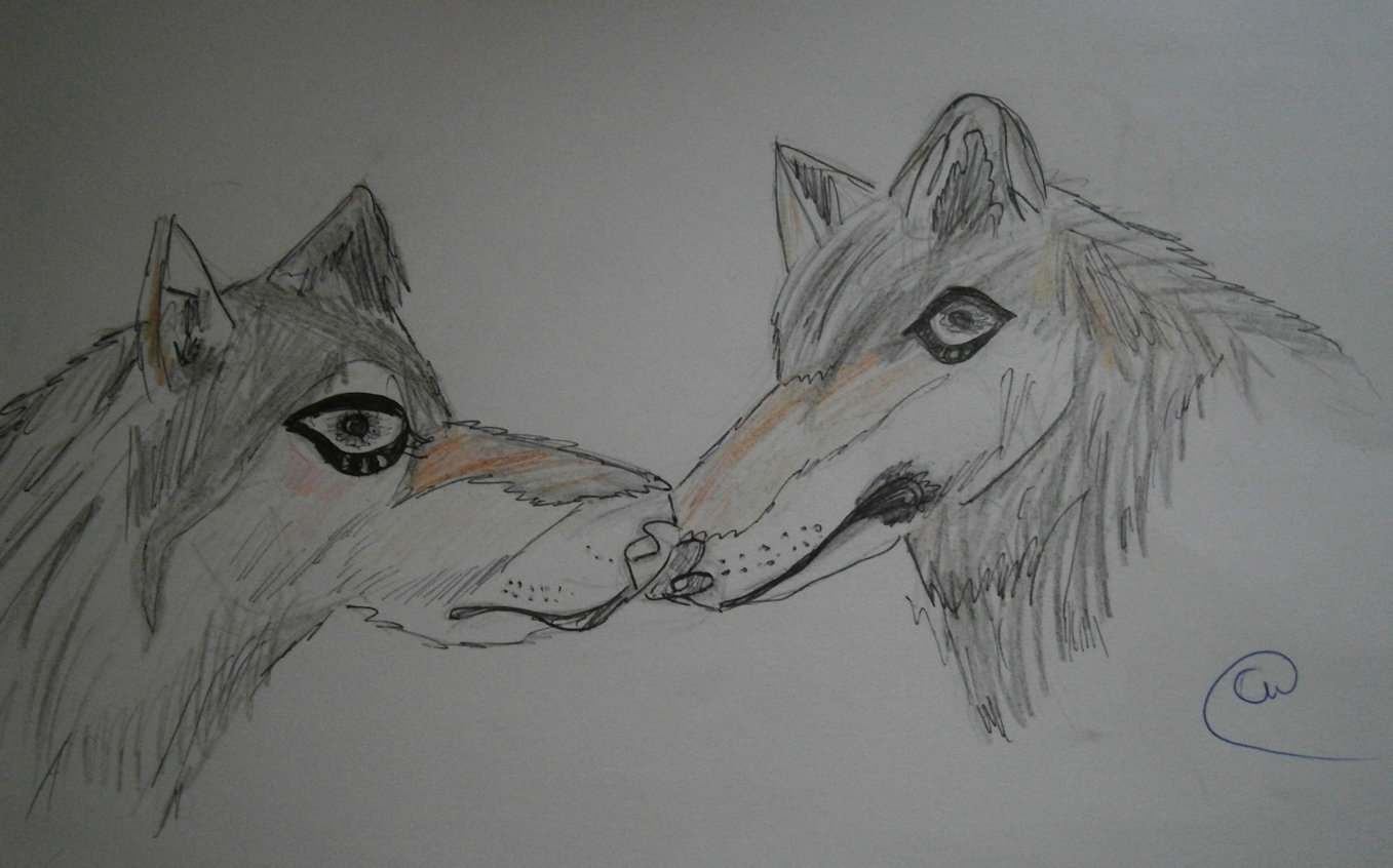 Uncategorized Drawing A Wolf this is me sarah mum of 3 chloes wolf drawings drawings