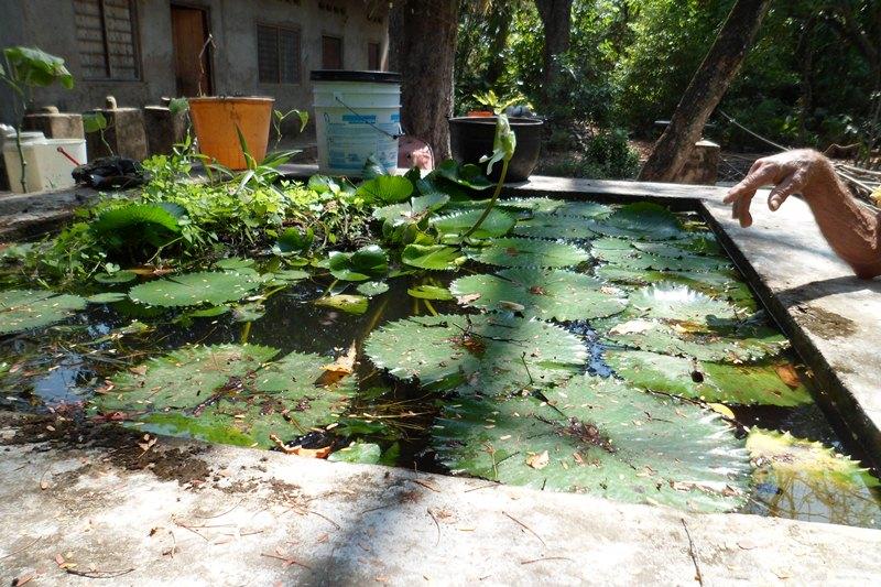 Mompox colombia guia tur stica for Caracteristicas de un jardin botanico