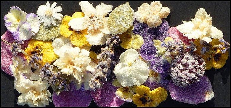 Blüten-Träume