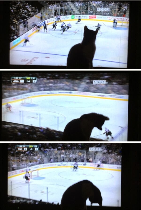 Funny cats - part 94 (40 pics + 10 gifs), cat pictures, cat watching hockey game on tv