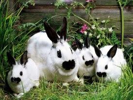 Mama conejo y sus crias en blanco y negro