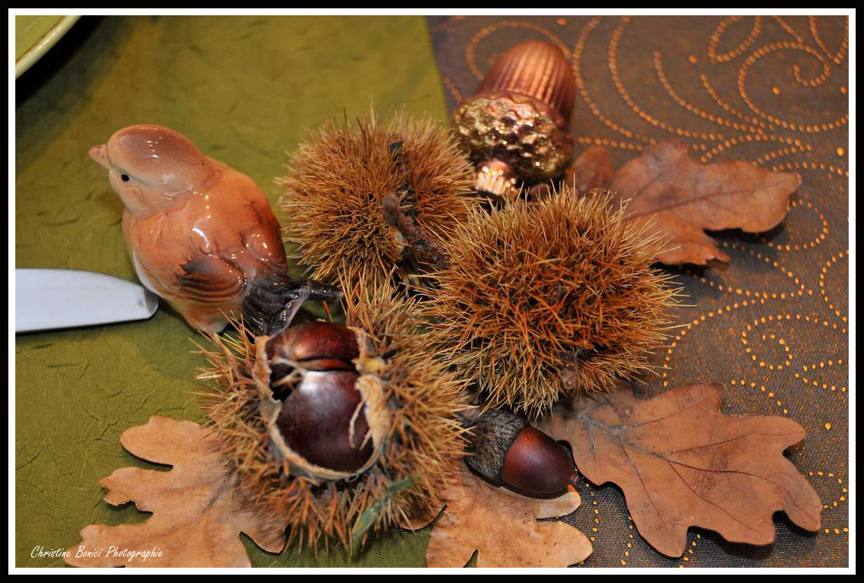 Table automne mes d corations de tables christine bonici photographie - Deco de table automne ...