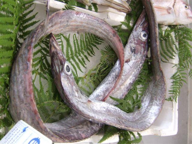 pesce economico e buono