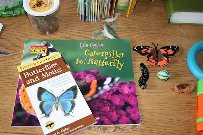 Butterfly Unit Study homeschool preschool