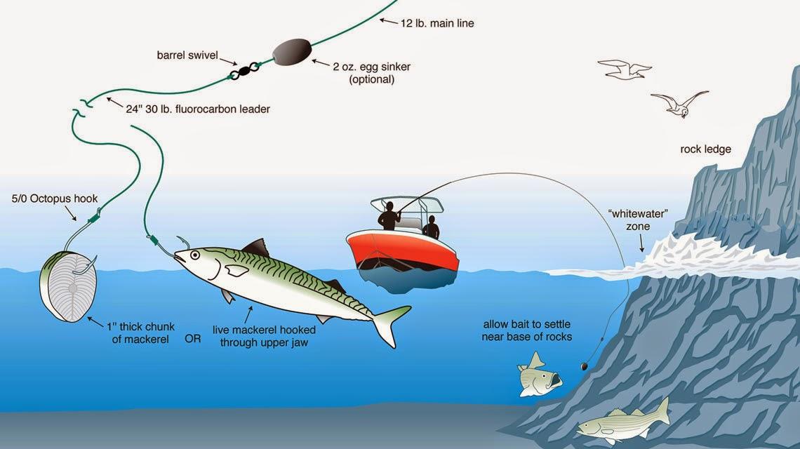 WARTA PANCING Ragam Teknik Amp Cara Memancing Laut