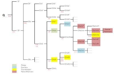 Q haplogroup tree