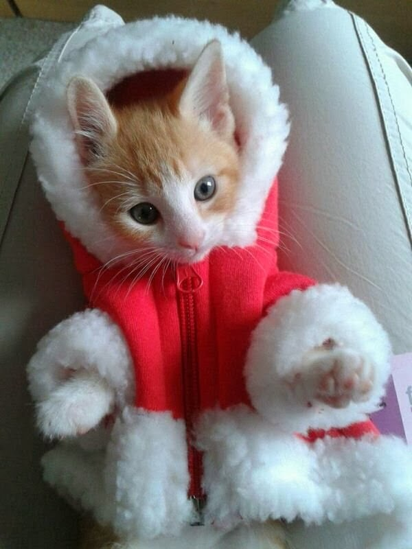 Funny cats - part 83 (40 pics + 10 gifs), cat pics, cat wears winter coat