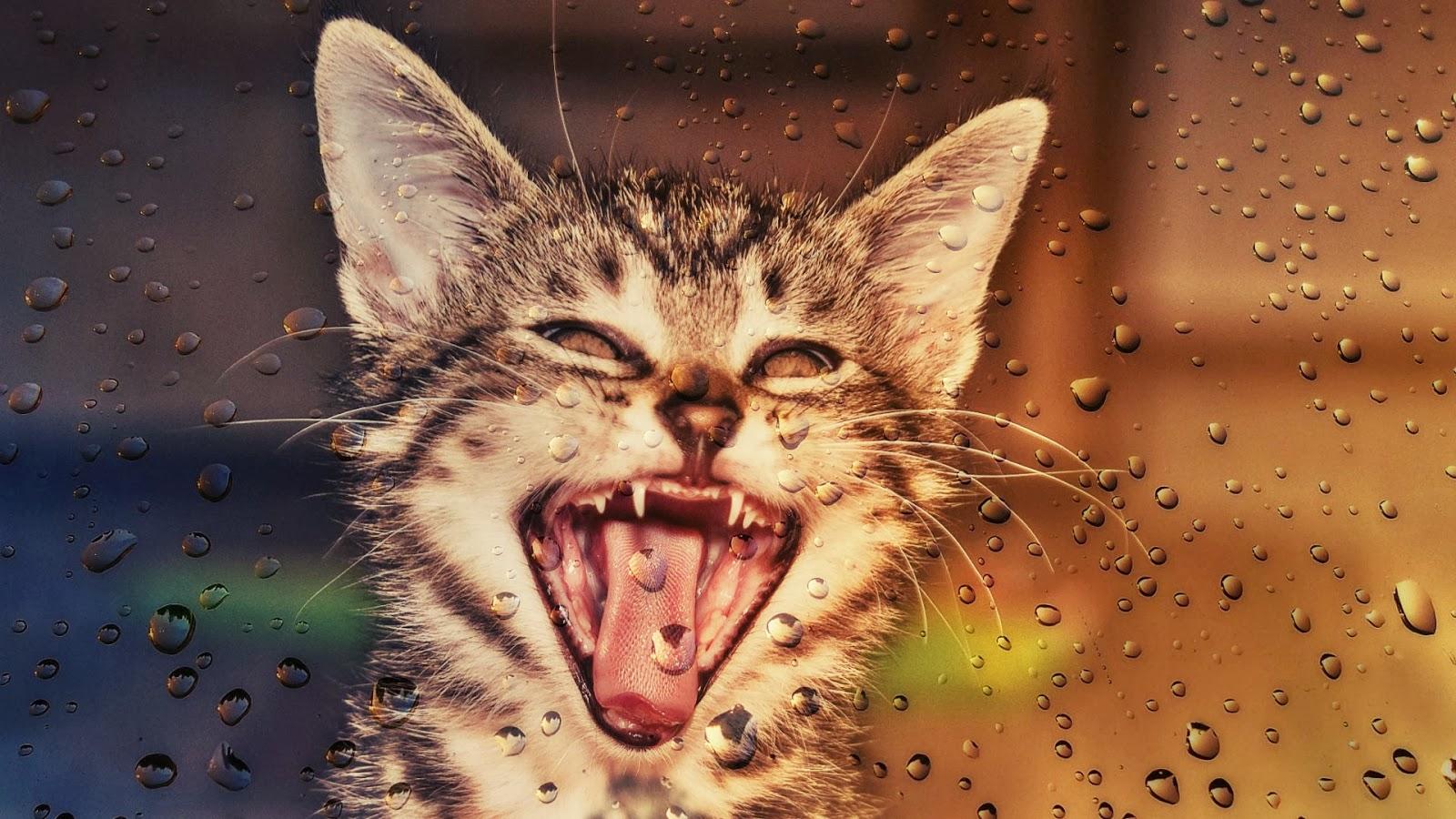 Amo la lluvia!