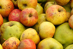 Apples used in making cider