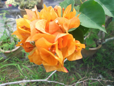 Pokok Bunga Kertas