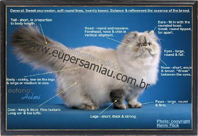 Gato persa Colorpoint