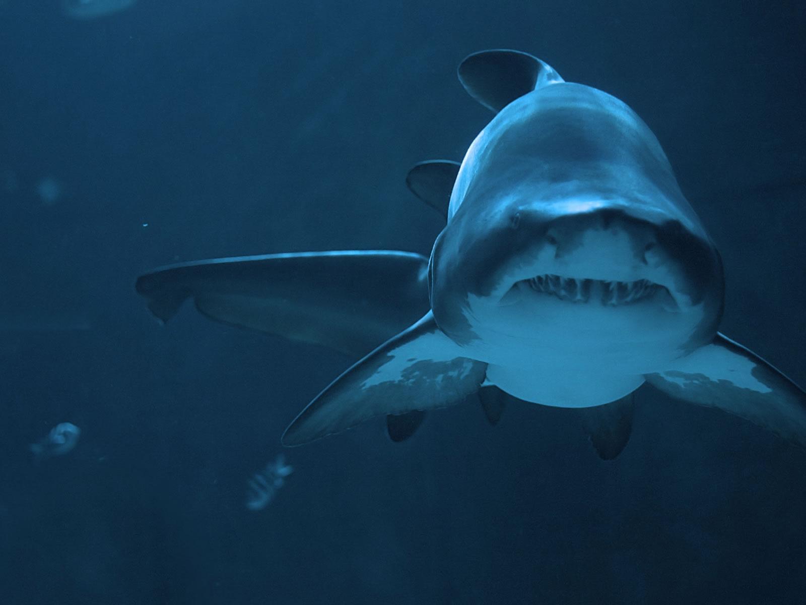 Amazing background images sak karepe isun for Amazing ocean images